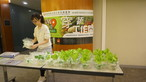 Outreach project II – UCN LOVE VEG@ Workplace Program - Photo - 23