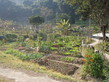 Visit to the Organic Farm Established by Produce Green Foundation (HD in Nutrition and Food Management programme) - Photo - 5