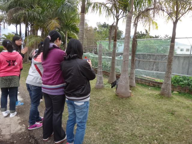 Visit to HK Garden Farm in Sai Kung - Photo - 7