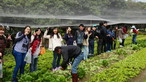 Visit to Organic Farm in Ha Pak Nai - Photo - 11