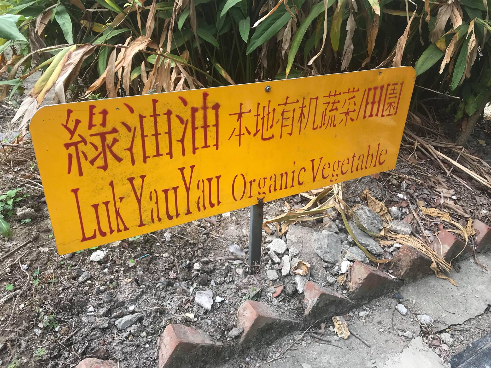 Visit to Luk Yau Yau Organic Farming  - Photo - 1